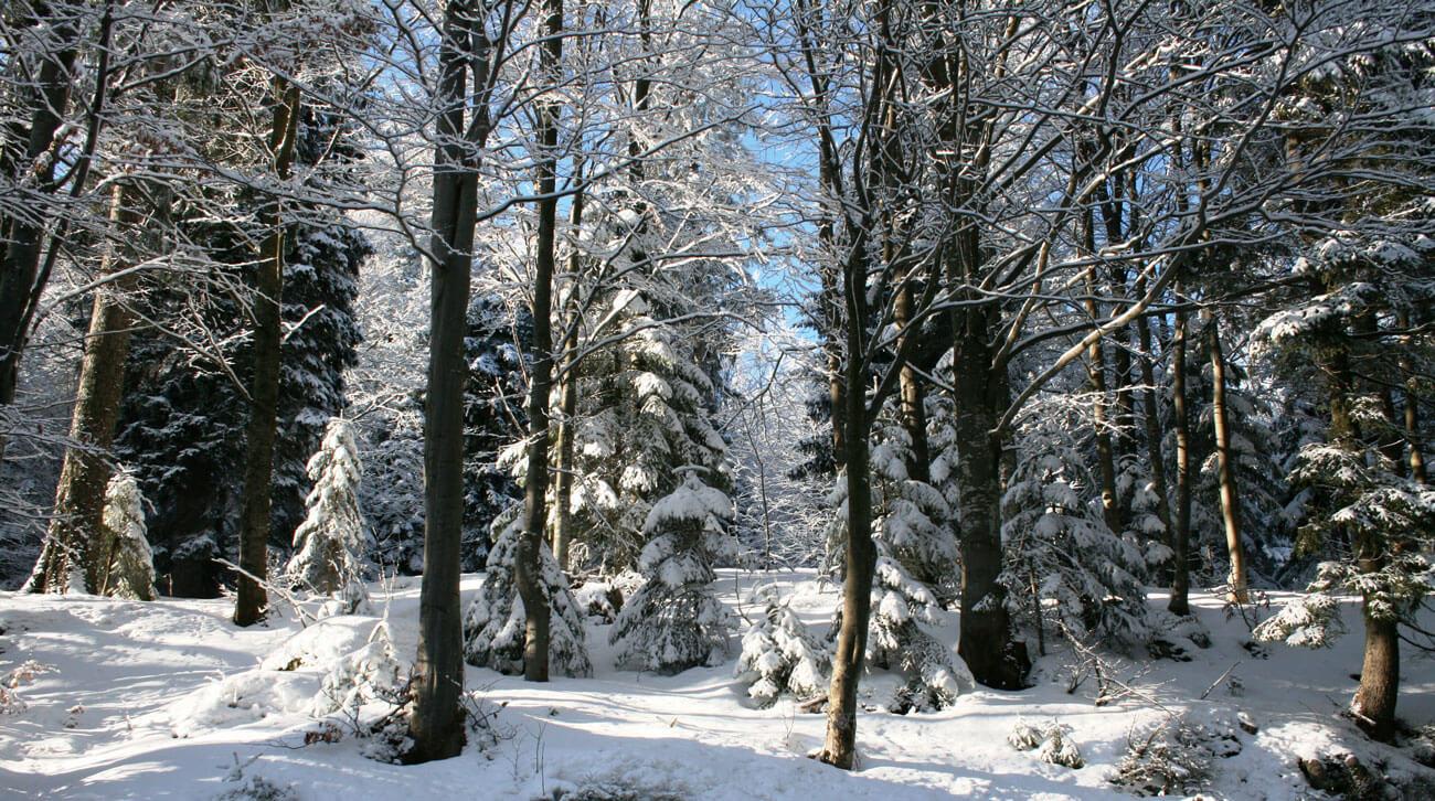 Urlaub-Winter-2008-186.jpg