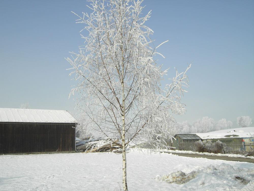 Weihnachten-2005-Winterlandschaft-071.jpg